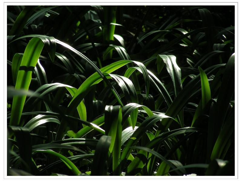framed_DSCN5217