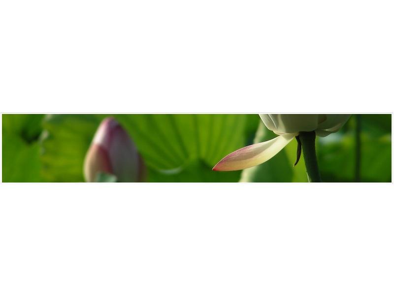 framed_DSCN5226